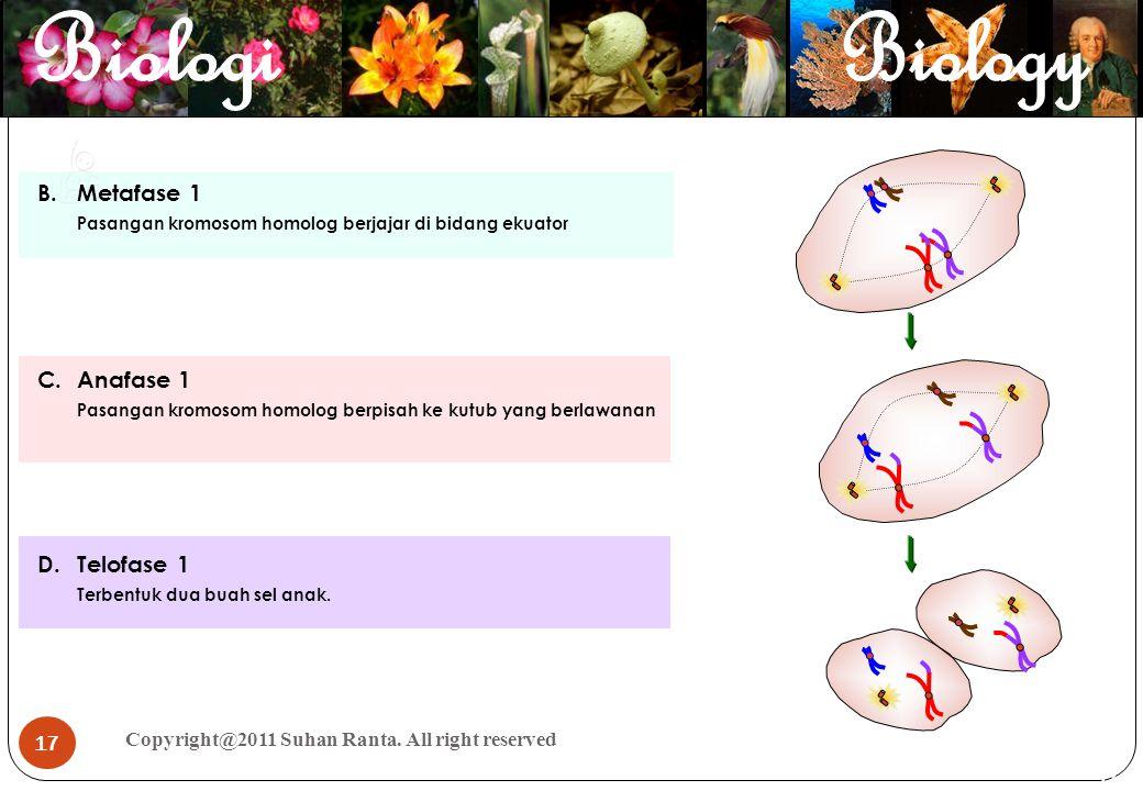 17 Copyright@2011 Suhan Ranta. All right reserved 17 B.Metafase 1 Pasangan kromosom homolog berjajar di bidang ekuator C.Anafase 1 Pasangan kromosom h