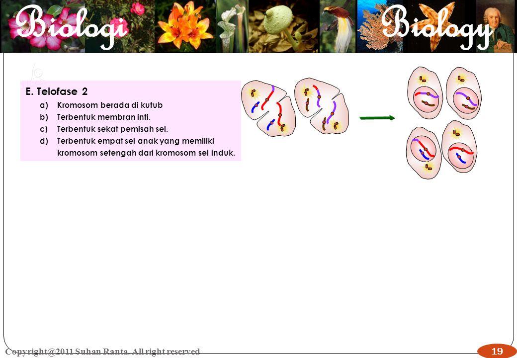 19 Copyright@2011 Suhan Ranta. All right reserved 19 E. Telofase 2 a)Kromosom berada di kutub b)Terbentuk membran inti. c)Terbentuk sekat pemisah sel.