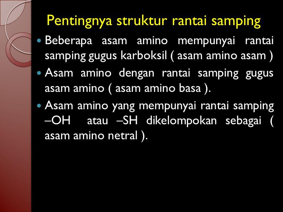 Pentingnya struktur rantai samping Beberapa asam amino mempunyai rantai samping gugus karboksil ( asam amino asam ) Asam amino dengan rantai samping gugus asam amino ( asam amino basa ).