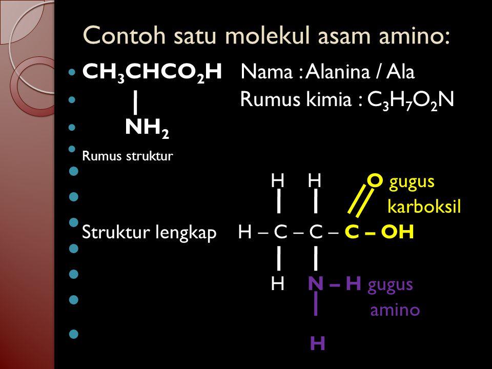 Contoh satu molekul asam amino: CH 3 CHCO 2 H Nama : Alanina / Ala Rumus kimia : C 3 H 7 O 2 N NH 2 Rumus struktur H H O gugus karboksil Struktur lengkap H – C – C – C – OH H N – H gugus amino H