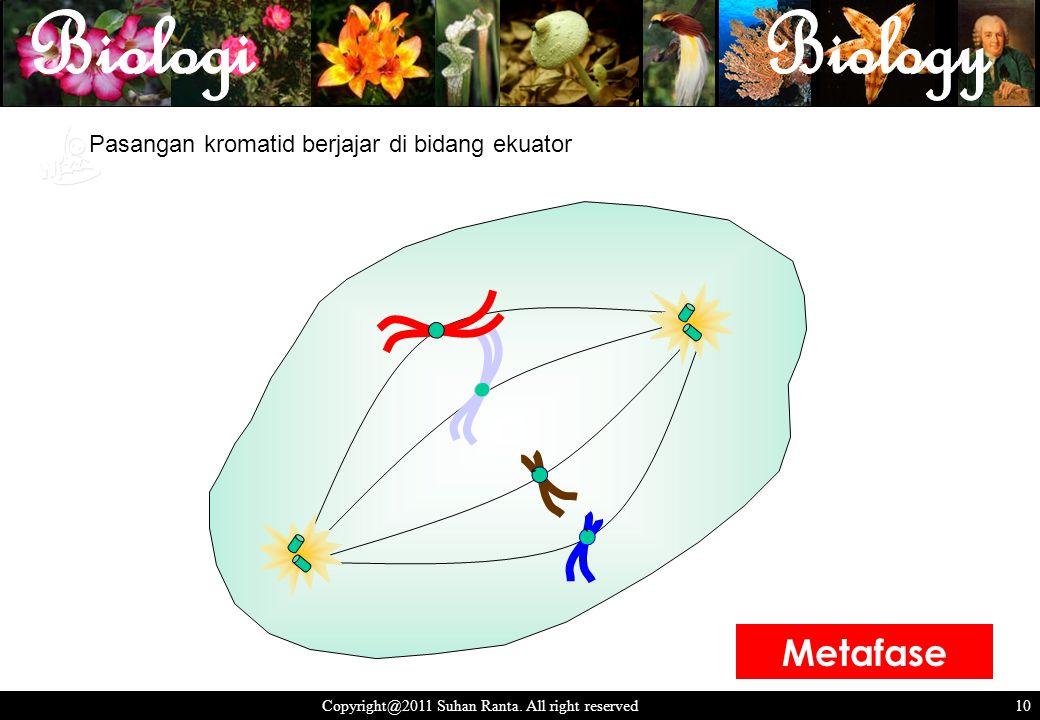 10 Copyright@2011 Suhan Ranta. All right reserved 10 Pasangan kromatid berjajar di bidang ekuator ` ` Metafase