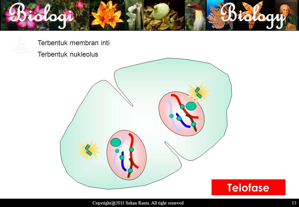 15 Copyright@2011 Suhan Ranta. All right reserved 15 ` ` ` ` Terbentuk nukleolus Terbentuk membran inti Telofase