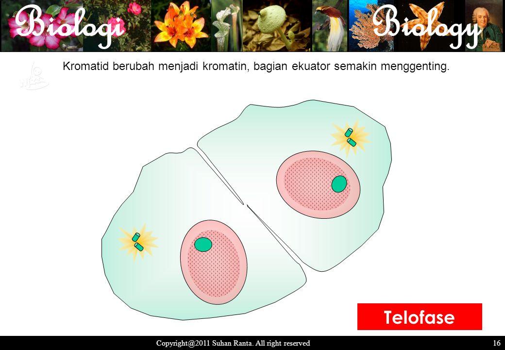 16 Copyright@2011 Suhan Ranta. All right reserved 16 Kromatid berubah menjadi kromatin, bagian ekuator semakin menggenting. Telofase