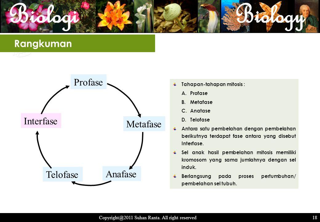 18 Copyright@2011 Suhan Ranta. All right reserved 18 Rangkuman Profase Metafase Anafase Telofase Interfase Tahapan-tahapan mitosis : A.Profase B.Metaf