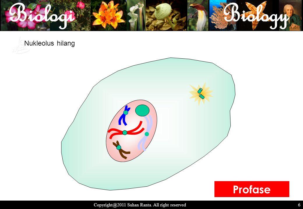 6 Copyright@2011 Suhan Ranta. All right reserved 6 Nukleolus hilang ` ` Profase