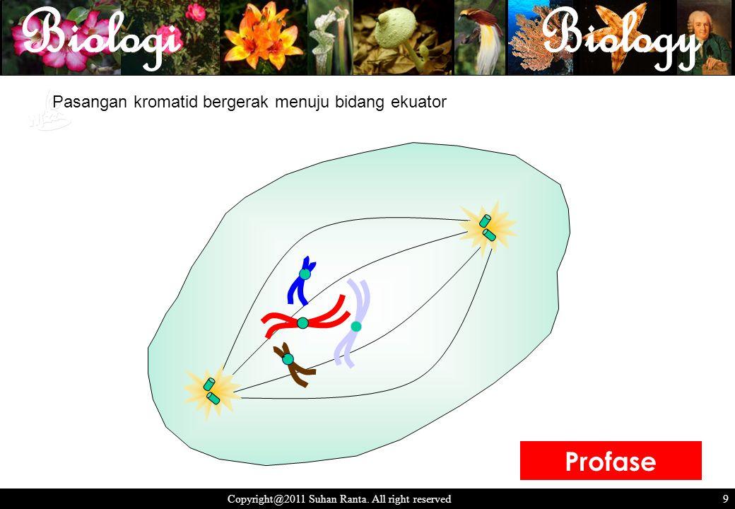 9 Copyright@2011 Suhan Ranta. All right reserved 9 Pasangan kromatid bergerak menuju bidang ekuator ` ` Profase