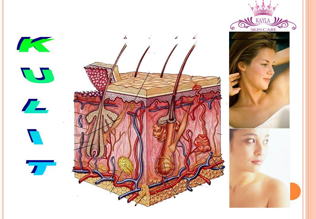 FUNGSI KULIT Bagian terluar dari tubuh manusia Fungsi : melindungi organ dalam dari pengaruh luar (lingkungan)