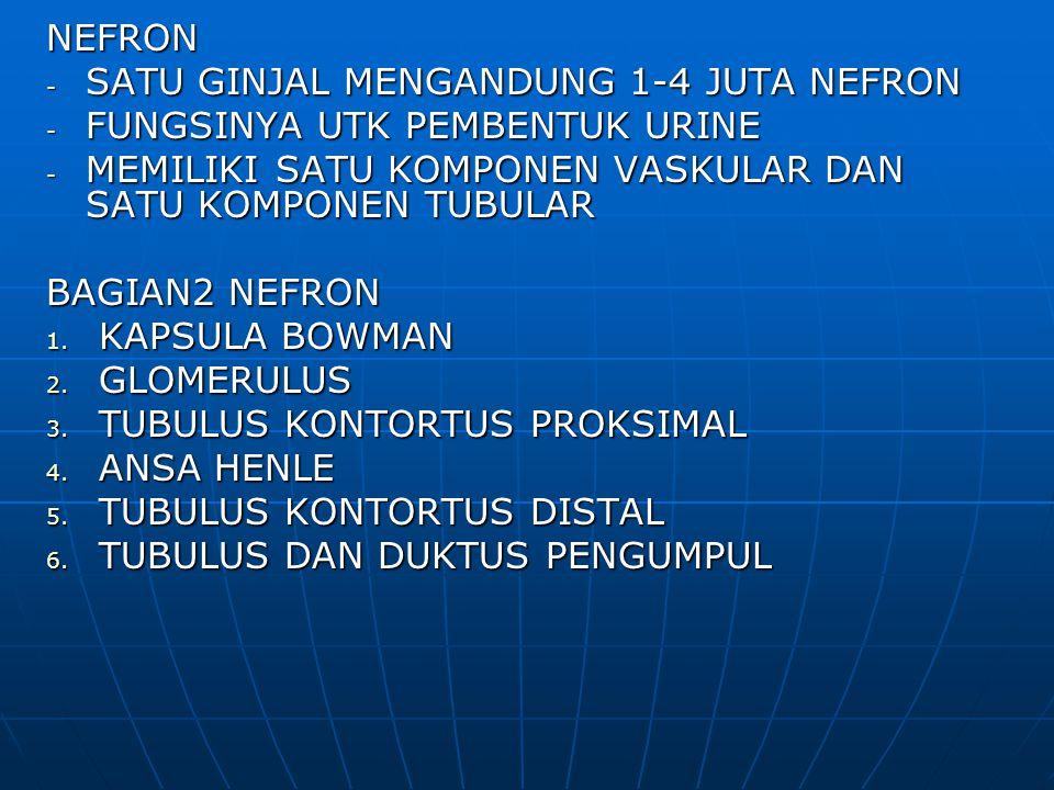 NEFRON - SATU GINJAL MENGANDUNG 1-4 JUTA NEFRON - FUNGSINYA UTK PEMBENTUK URINE - MEMILIKI SATU KOMPONEN VASKULAR DAN SATU KOMPONEN TUBULAR BAGIAN2 NE