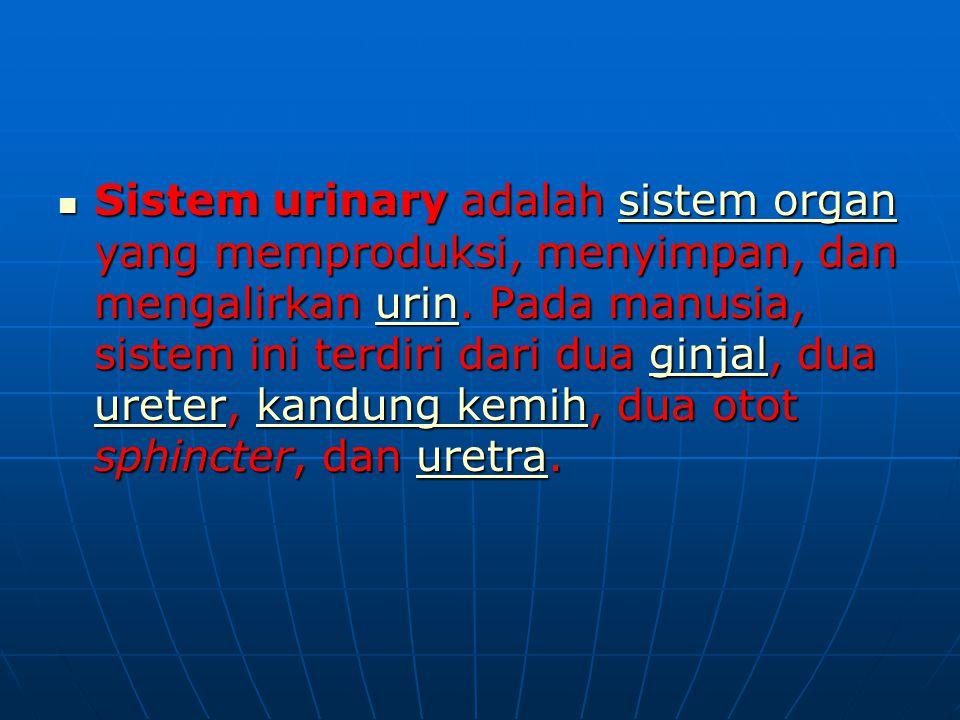 Sistem urinary adalah sistem organ yang memproduksi, menyimpan, dan mengalirkan urin. Pada manusia, sistem ini terdiri dari dua ginjal, dua ureter, ka