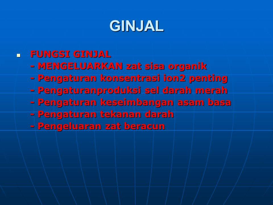 GINJAL FUNGSI GINJAL FUNGSI GINJAL - MENGELUARKAN zat sisa organik - Pengaturan konsentrasi ion2 penting - Pengaturanproduksi sel darah merah - Pengat