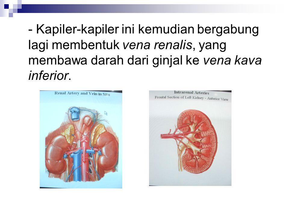 Uretra pada pria terdiri dari : a.Uretra prostatika b.