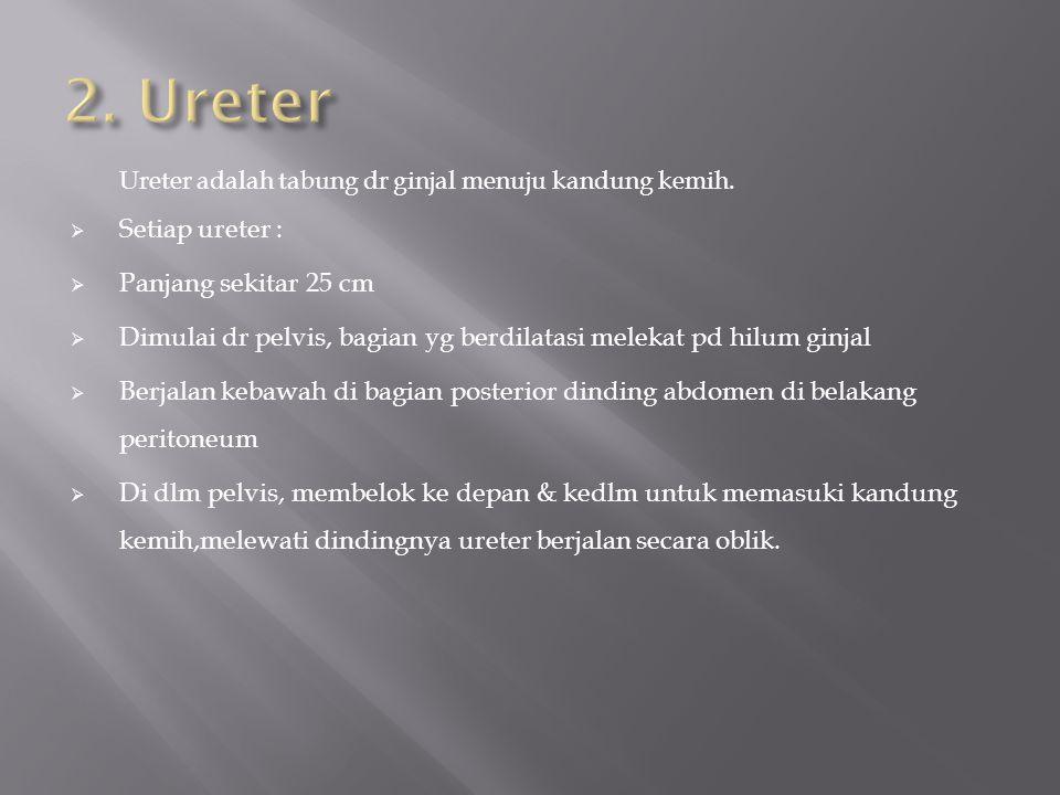Ureter adalah tabung dr ginjal menuju kandung kemih.  Setiap ureter :  Panjang sekitar 25 cm  Dimulai dr pelvis, bagian yg berdilatasi melekat pd h
