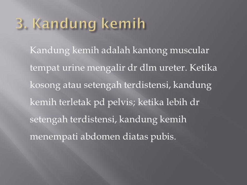Kandung kemih adalah kantong muscular tempat urine mengalir dr dlm ureter.