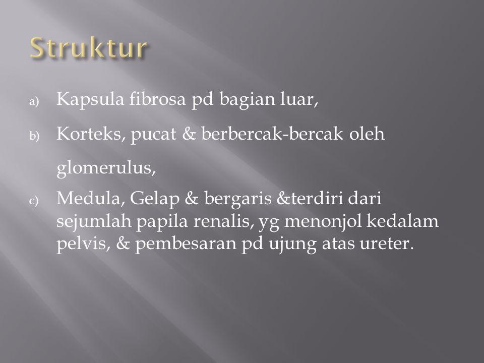 a) Kapsula fibrosa pd bagian luar, b) Korteks, pucat & berbercak-bercak oleh glomerulus, c) Medula, Gelap & bergaris &terdiri dari sejumlah papila renalis, yg menonjol kedalam pelvis, & pembesaran pd ujung atas ureter.