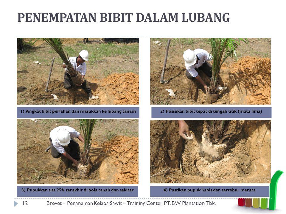 PENEMPATAN BIBIT DALAM LUBANG 12Brevet – Penanaman Kelapa Sawit – Training Center PT.