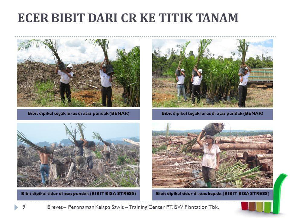 PEMBUATAN LUBANG TANAM 10Brevet – Penanaman Kelapa Sawit – Training Center PT.