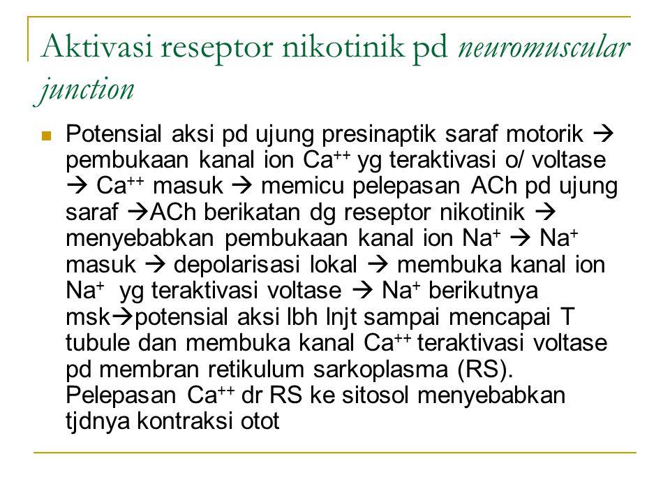 Aktivasi reseptor nikotinik pd neuromuscular junction Potensial aksi pd ujung presinaptik saraf motorik  pembukaan kanal ion Ca ++ yg teraktivasi o/ voltase  Ca ++ masuk  memicu pelepasan ACh pd ujung saraf  ACh berikatan dg reseptor nikotinik  menyebabkan pembukaan kanal ion Na +  Na + masuk  depolarisasi lokal  membuka kanal ion Na + yg teraktivasi voltase  Na + berikutnya msk  potensial aksi lbh lnjt sampai mencapai T tubule dan membuka kanal Ca ++ teraktivasi voltase pd membran retikulum sarkoplasma (RS).