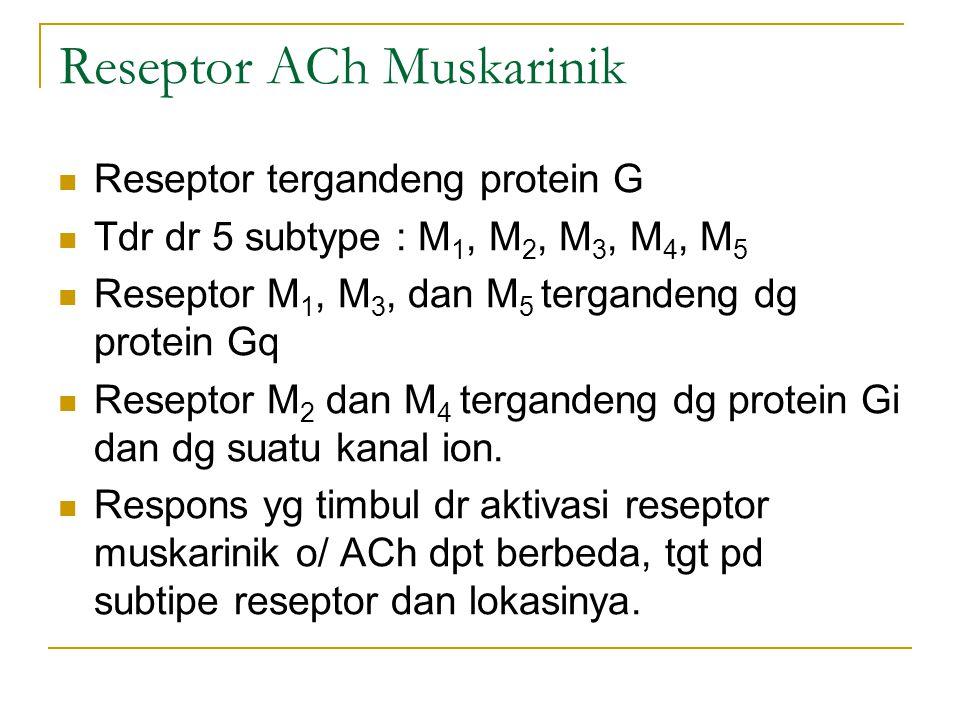Reseptor ACh Muskarinik Reseptor tergandeng protein G Tdr dr 5 subtype : M 1, M 2, M 3, M 4, M 5 Reseptor M 1, M 3, dan M 5 tergandeng dg protein Gq Reseptor M 2 dan M 4 tergandeng dg protein Gi dan dg suatu kanal ion.