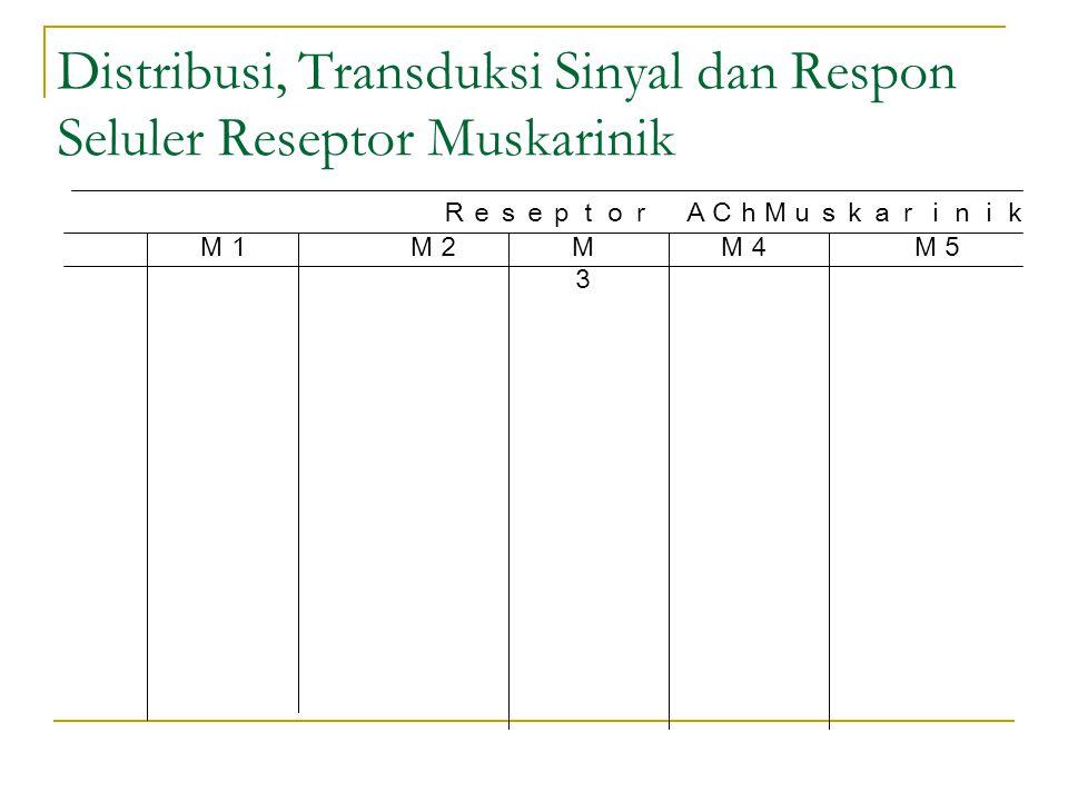 Distribusi, Transduksi Sinyal dan Respon Seluler Reseptor Muskarinik Reseptor AChMuskarinik M1M2M3M3 M4M5