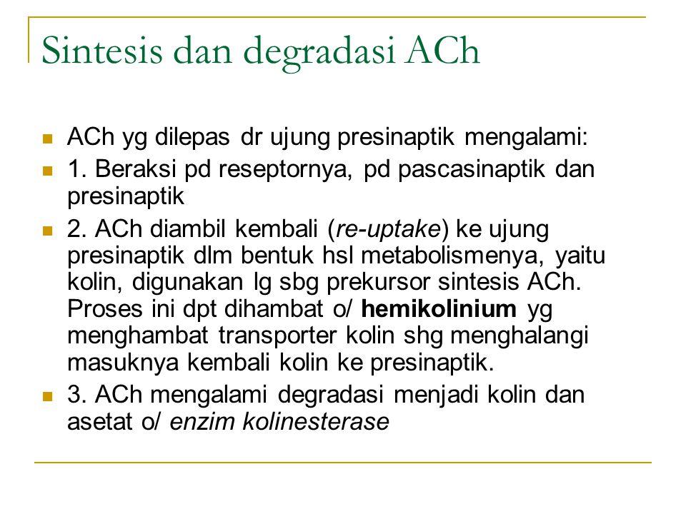 Sintesis dan degradasi ACh ACh yg dilepas dr ujung presinaptik mengalami: 1.
