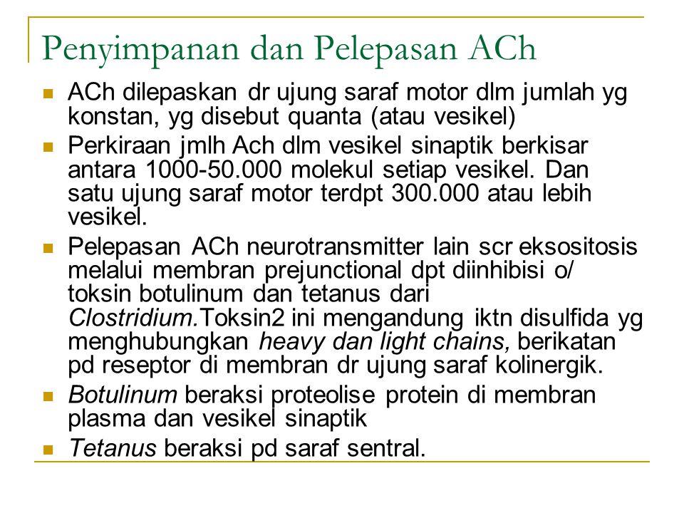 Penyimpanan dan Pelepasan ACh ACh dilepaskan dr ujung saraf motor dlm jumlah yg konstan, yg disebut quanta (atau vesikel) Perkiraan jmlh Ach dlm vesikel sinaptik berkisar antara 1000-50.000 molekul setiap vesikel.