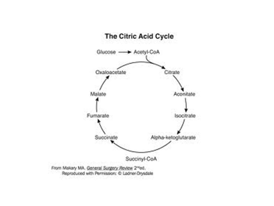 http://medicalmnemonics4u.blogspot.com/2009/11/citric-acid-cycle.html