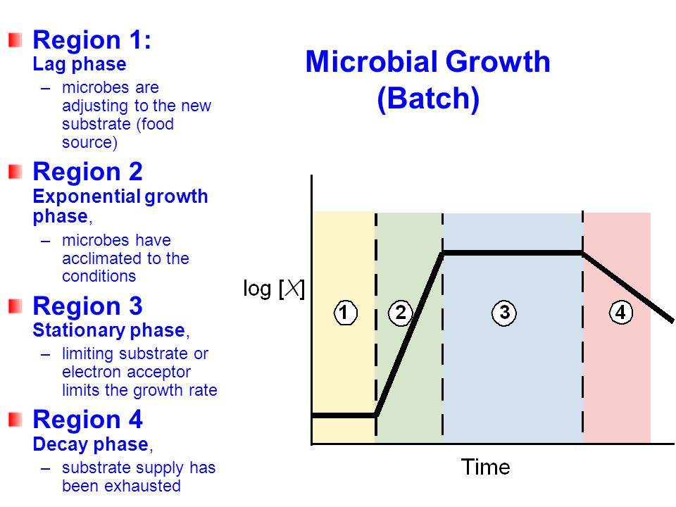 Microbial Growth (Batch) Region 1: Lag phase –microbes are adjusting to the new substrate (food source) Region 2 Exponential growth phase, –microbes h