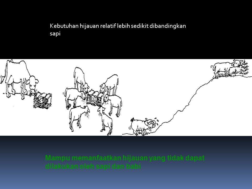  Tingginya permintaan exports Negara-negaraTimur Tengah  Tingginya permintaan untuk acara keagamaan (Aqiqah)