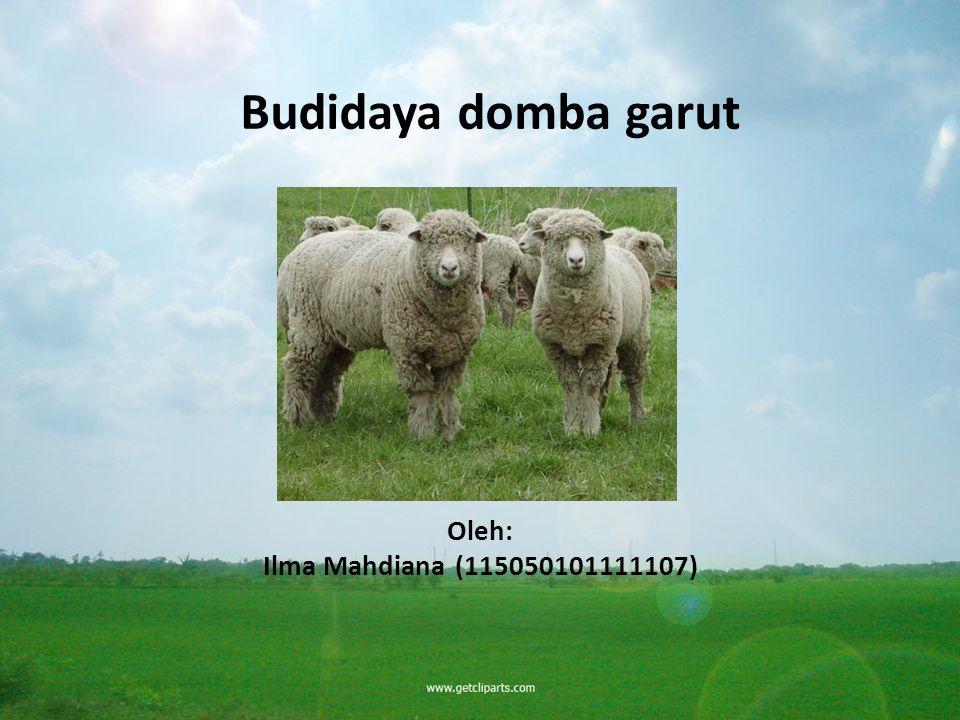 Budidaya domba garut Oleh: Ilma Mahdiana(115050101111107)