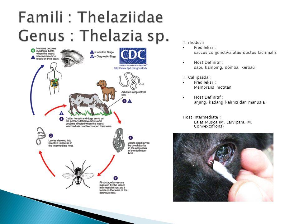 T. rhodesii Predileksi : saccus conjunctiva atau ductus lacrimalis Host Definitif : sapi, kambing, domba, kerbau T. Callipaeda : Predileksi : Membrans