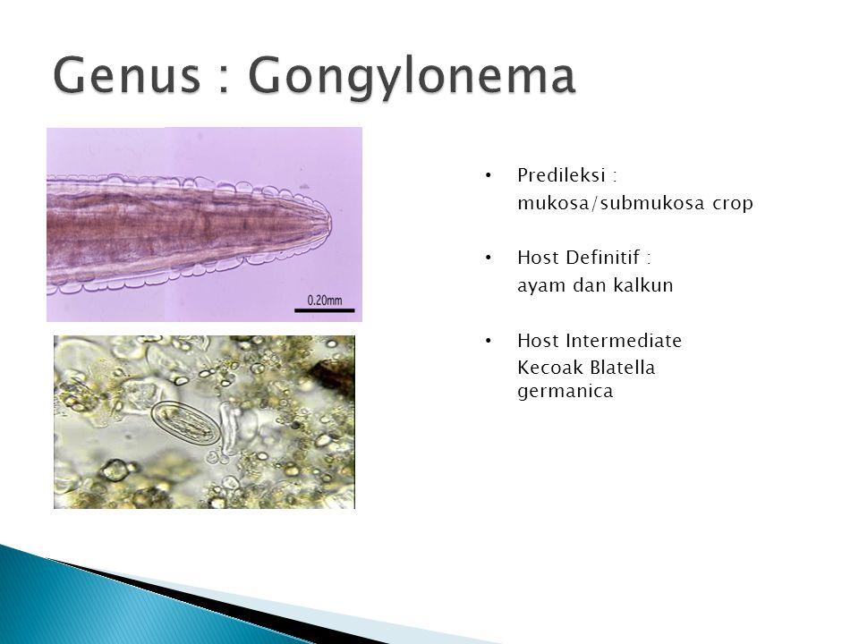 Predileksi : mukosa/submukosa crop Host Definitif : ayam dan kalkun Host Intermediate Kecoak Blatella germanica