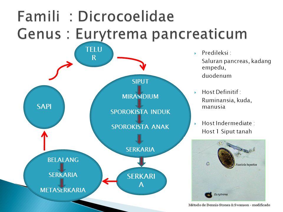  Predileksi : Saluran pancreas, kadang empedu, duodenum  Host Definitif : Ruminansia, kuda, manusia  Host Indermediate : Host 1 Siput tanah Host 2 Belalang TELU R SERKARI A SIPUT MIRASIDIUM SPOROKISTA INDUK SPOROKISTA ANAK SERKARIA BELALANG SERKARIA METASERKARIA SAPI