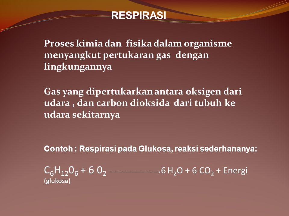 RESPIRASI Proses kimia dan fisika dalam organisme menyangkut pertukaran gas dengan lingkungannya Gas yang dipertukarkan antara oksigen dari udara, dan