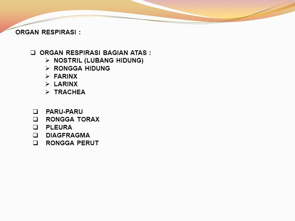 ORGAN RESPIRASI :  ORGAN RESPIRASI BAGIAN ATAS :  NOSTRIL (LUBANG HIDUNG)  RONGGA HIDUNG  FARINX  LARINX  TRACHEA  PARU-PARU  RONGGA TORAX  P