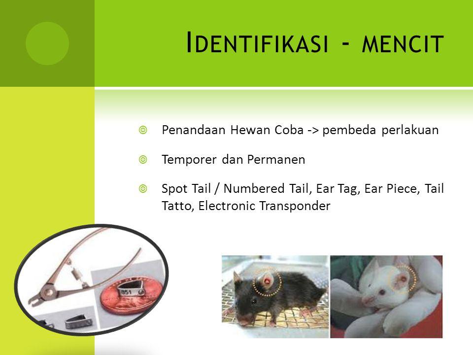 I DENTIFIKASI - MENCIT  Penandaan Hewan Coba -> pembeda perlakuan  Temporer dan Permanen  Spot Tail / Numbered Tail, Ear Tag, Ear Piece, Tail Tatto