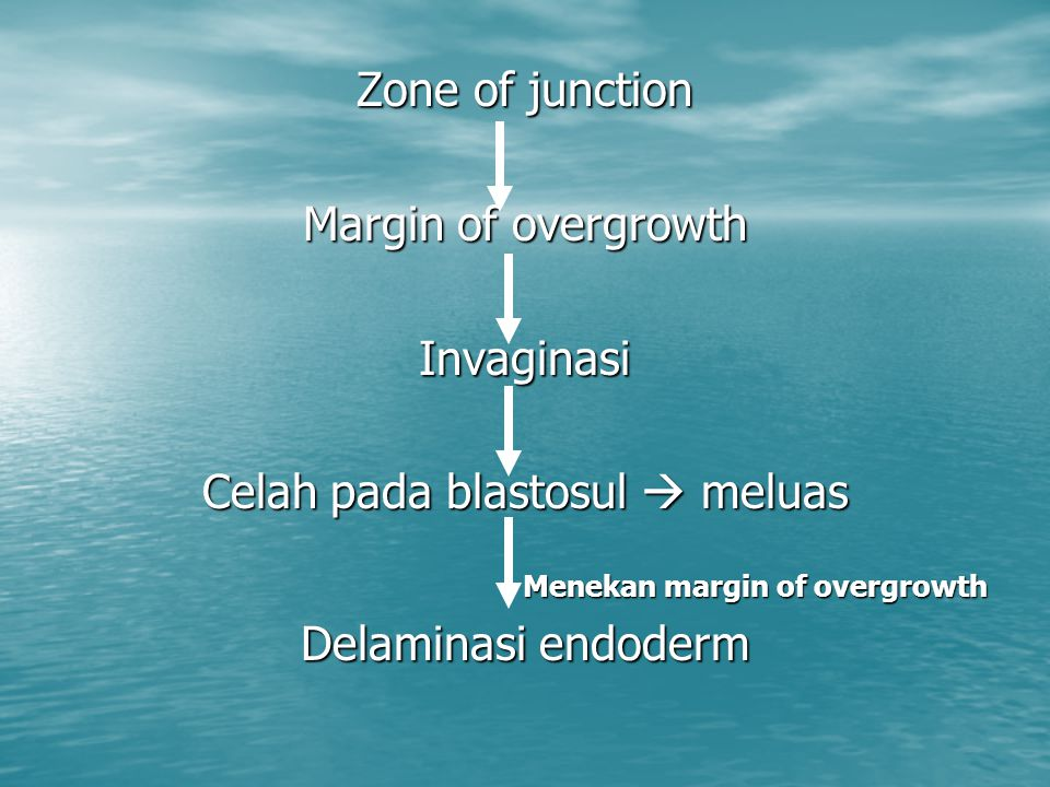 Zone of junction Margin of overgrowth Invaginasi Celah pada blastosul  meluas Menekan margin of overgrowth Delaminasi endoderm