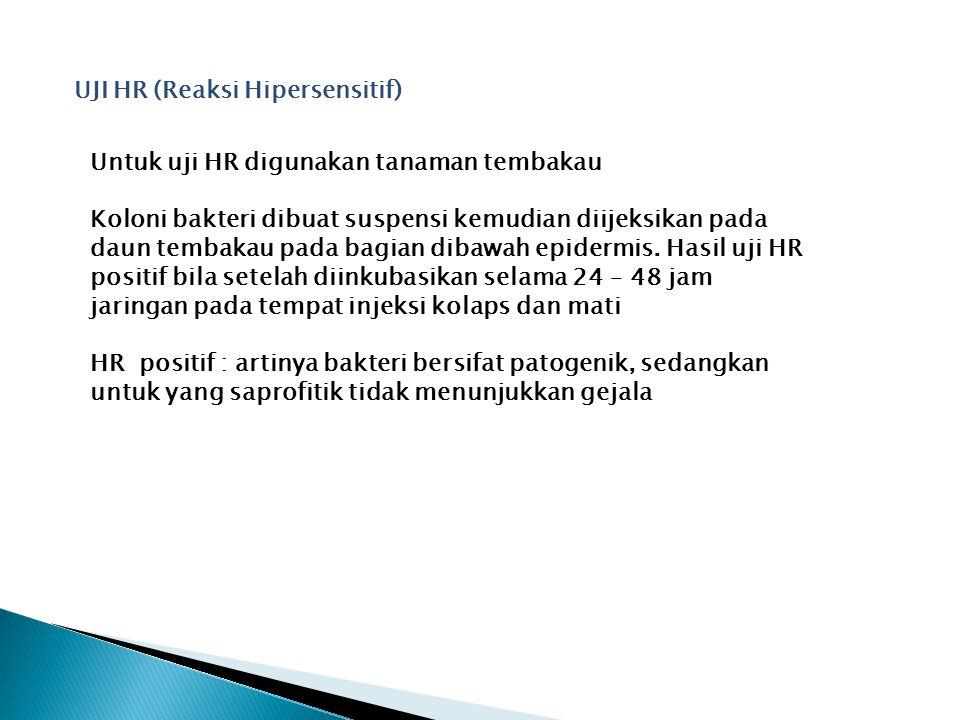 UJI HR (Reaksi Hipersensitif) Untuk uji HR digunakan tanaman tembakau Koloni bakteri dibuat suspensi kemudian diijeksikan pada daun tembakau pada bagi