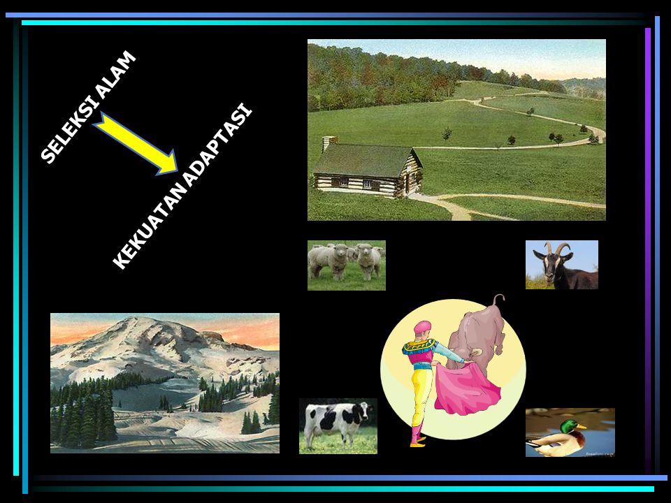 Robert Bakewell (1800) Bapak Pemuliaan Ternak Inbreeding dan Linebreeding untuk memperoleh populasi yang seragam SELEKSI BUATAN Kuda Shire Domba Leicester Sapi Longhorn