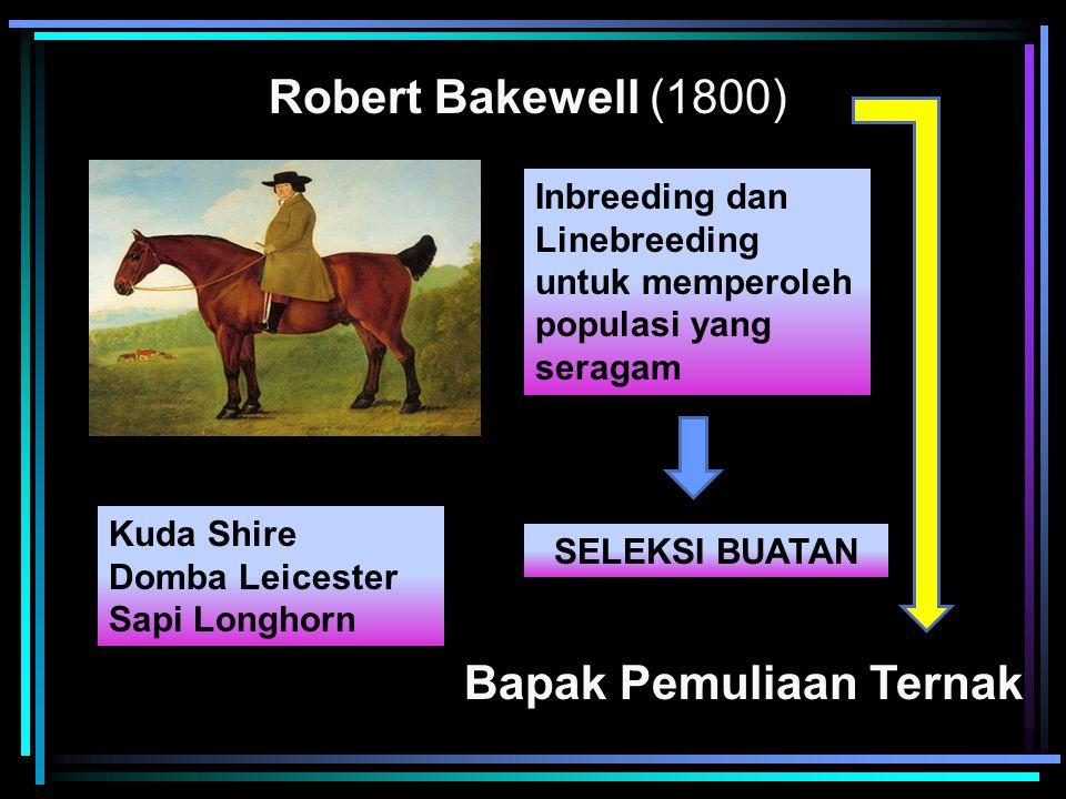 Robert Bakewell (1800) Bapak Pemuliaan Ternak Inbreeding dan Linebreeding untuk memperoleh populasi yang seragam SELEKSI BUATAN Kuda Shire Domba Leice