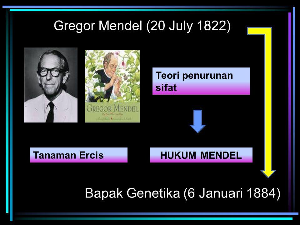Gregor Mendel (20 July 1822) Bapak Genetika (6 Januari 1884) Teori penurunan sifat HUKUM MENDEL Tanaman Ercis