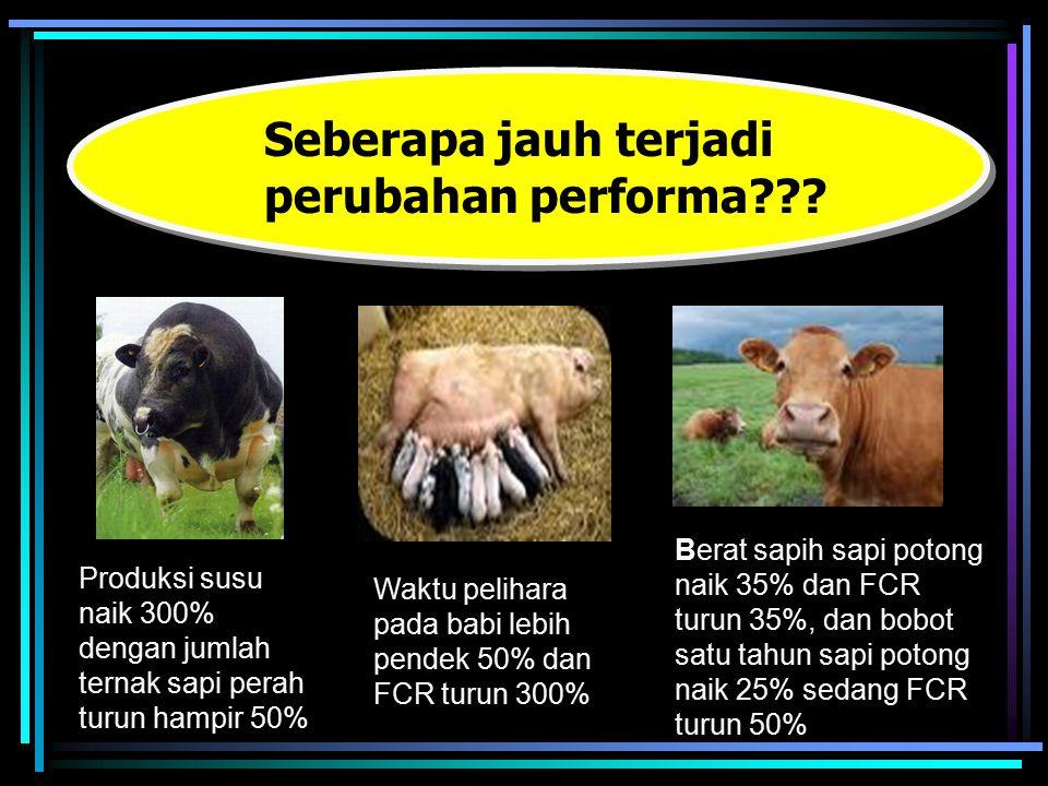 Produksi susu naik 300% dengan jumlah ternak sapi perah turun hampir 50% Seberapa jauh terjadi perubahan performa??? Waktu pelihara pada babi lebih pe