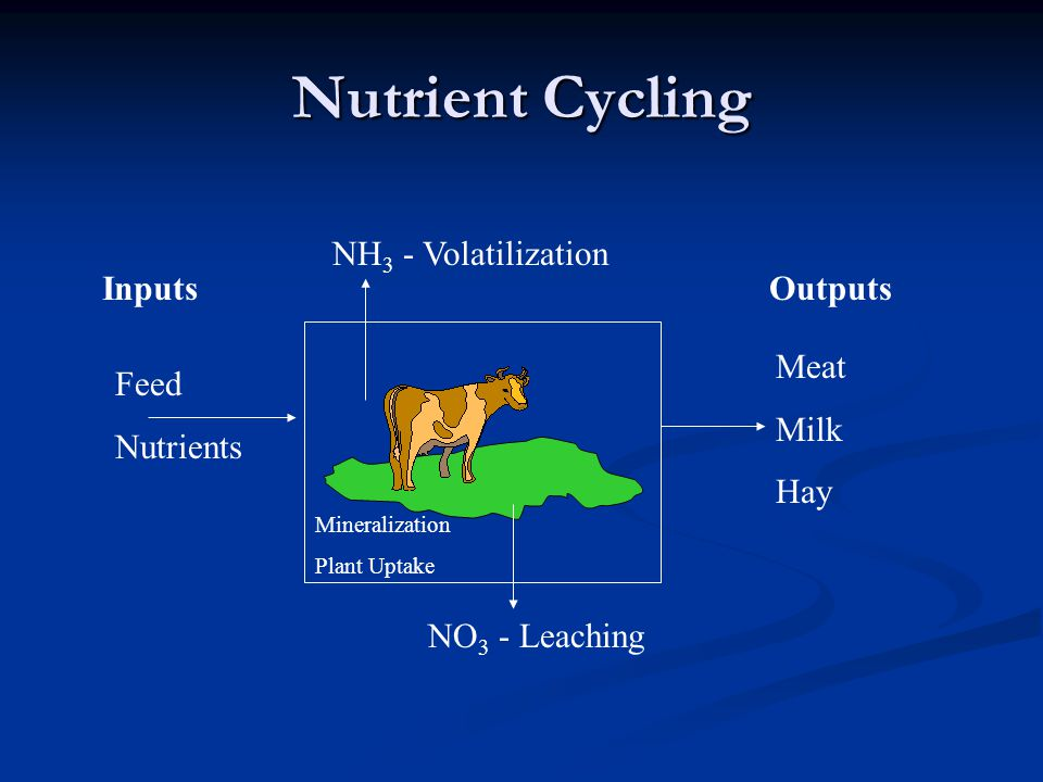 Nutrient Cycling Inputs Feed Nutrients Outputs Meat Milk Hay NO 3 - Leaching NH 3 - Volatilization Mineralization Plant Uptake