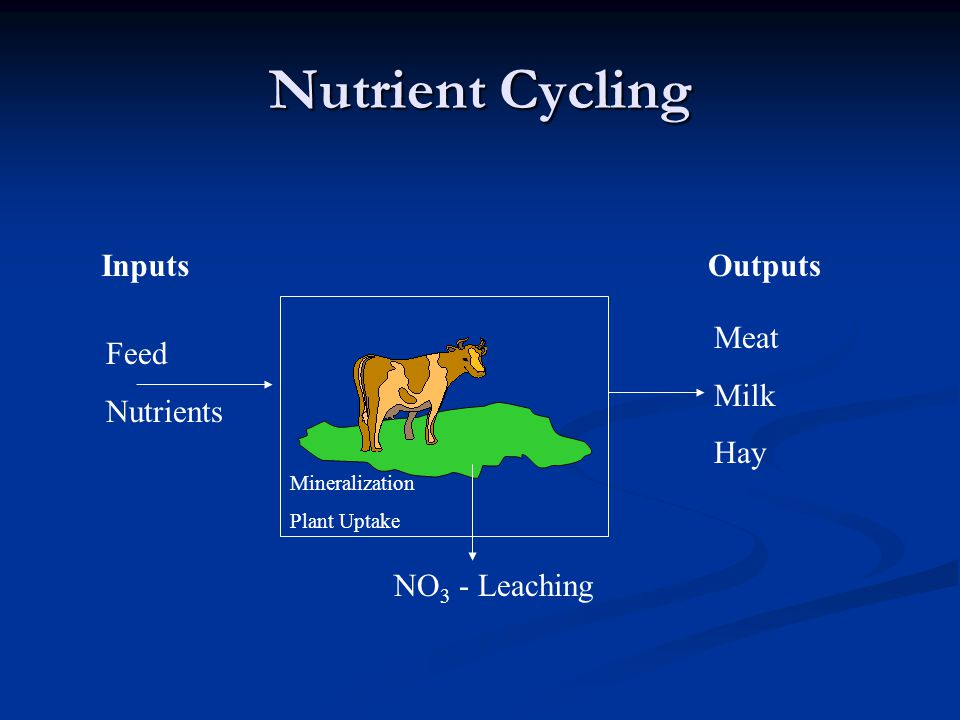 Nutrient Cycling Inputs Feed Nutrients Outputs Meat Milk Hay NO 3 - Leaching Mineralization Plant Uptake