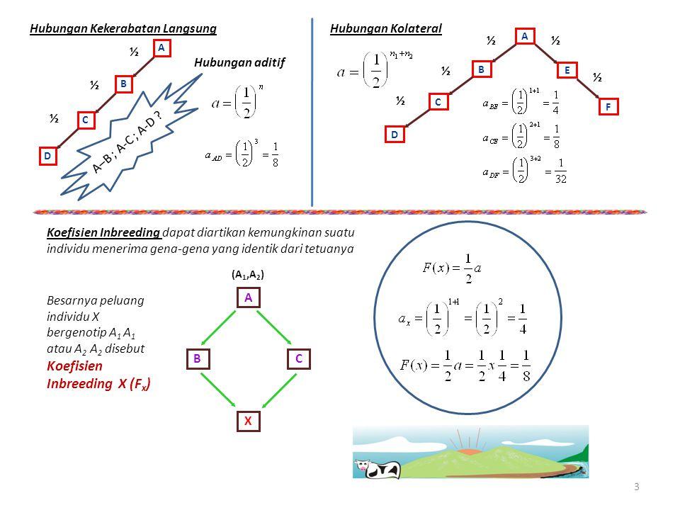 Hubungan Kekerabatan Langsung ½ A B C D ½ ½ Hubungan aditif A–B ; A-C ; A-D ? Hubungan Kolateral ½ A B C D ½ ½ E F Koefisien Inbreeding dapat diartika