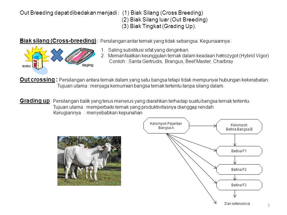 5 Out Breeding dapat dibedakan menjadi : (1) Biak Silang (Cross Breeding) (2) Biak Silang luar (Out Breeding) (3) Biak Tingkat (Grading Up). Biak sila