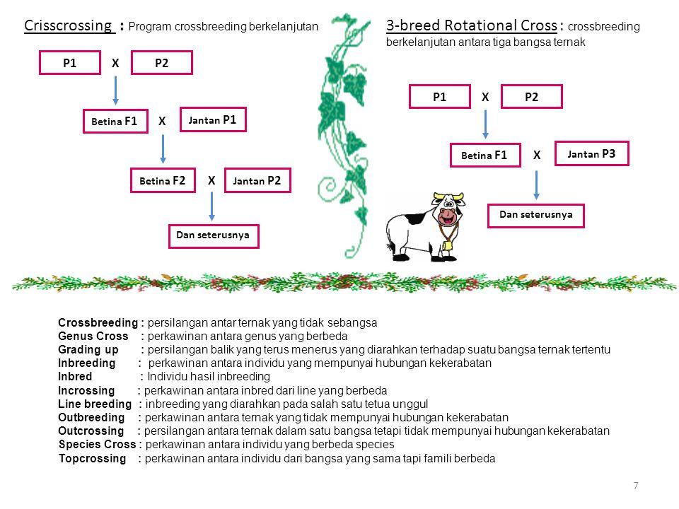 7 Crisscrossing : Program crossbreeding berkelanjutan P1P2 X Betina F1 Jantan P1 X Betina F2 X Jantan P2 Dan seterusnya 3-breed Rotational Cross : cro