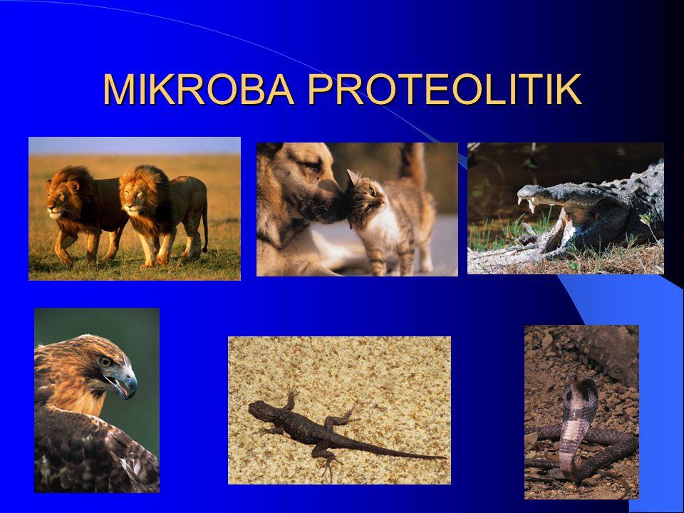 MIKROBA PROTEOLITIK