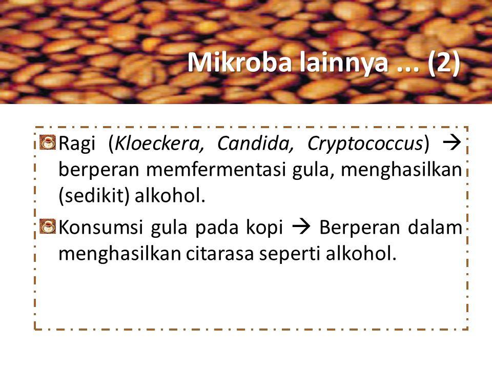Mikroba lainnya... (2) Ragi (Kloeckera, Candida, Cryptococcus)  berperan memfermentasi gula, menghasilkan (sedikit) alkohol. Konsumsi gula pada kopi