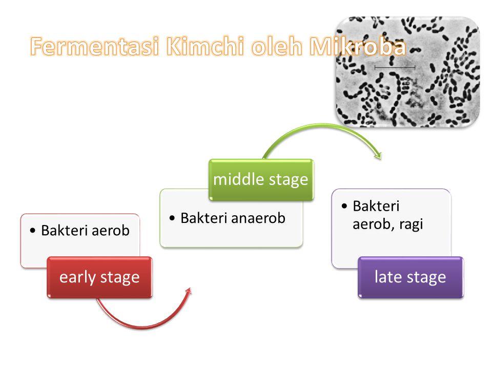 Bakteri aerob early stage Bakteri anaerob middle stage Bakteri aerob, ragi late stage
