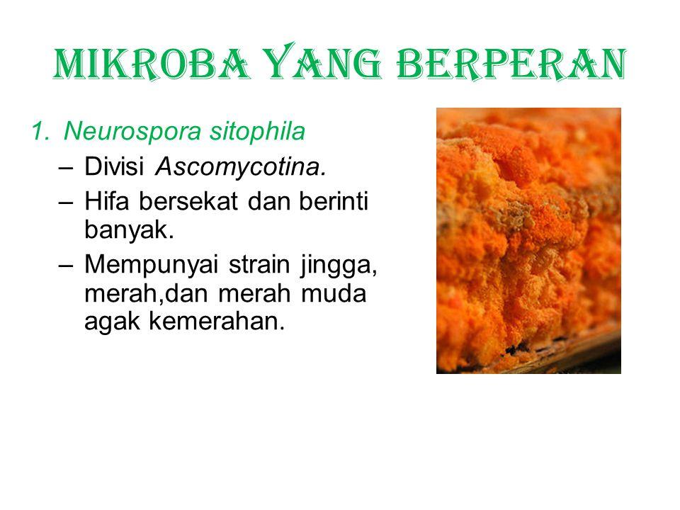 Mikroba yang berperan 1.Neurospora sitophila –Divisi Ascomycotina.